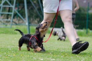 #dogwalking, #dogwalkingbyyourside, obediencetrainingLasVegas