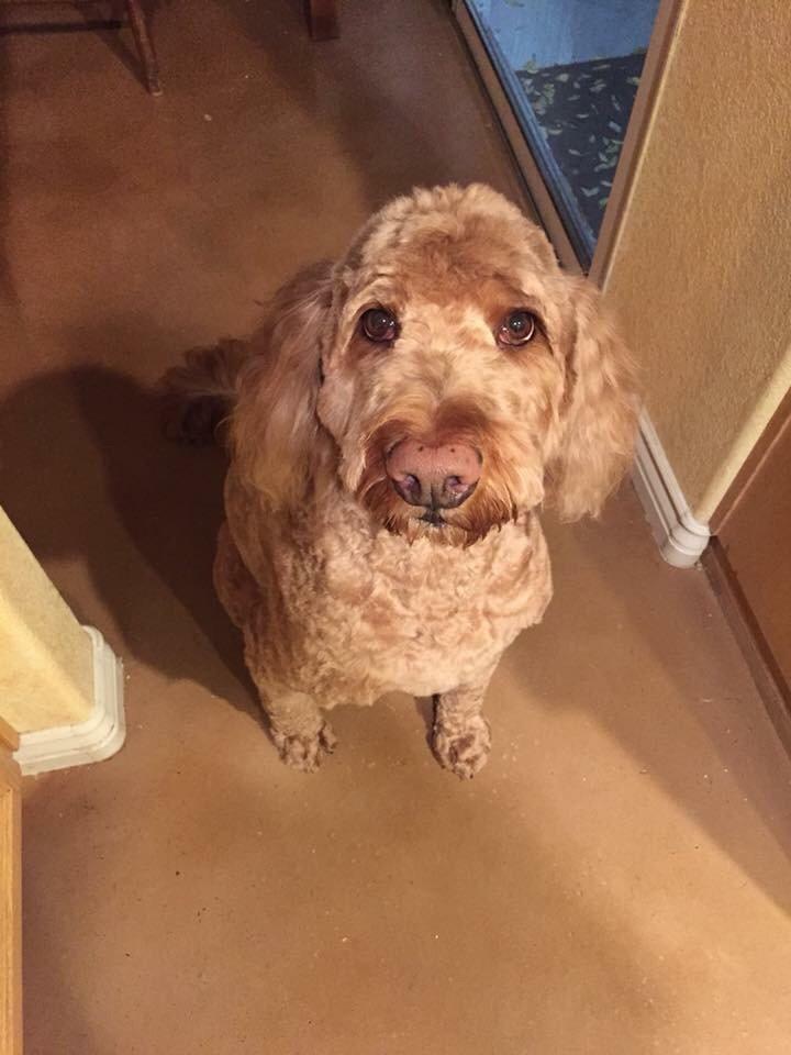 #smalldogtraining, #dogsofbarkbusters, #bestdogtrainingbarkbusterslasvegas