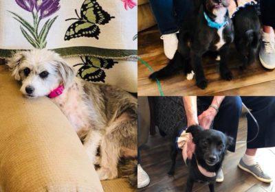 #bestdogtraininglasvegas, #dogsofbarkbusters, any size, any age, any breed