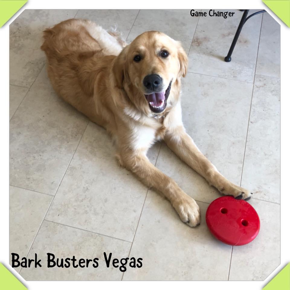 #goldenretriever, #lovegoldens, #barkbustersdogtraininglasvegas