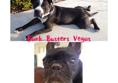 lasvegasdogtraining, #dogsofbarkbusters,, #bestdogtrainingmethod
