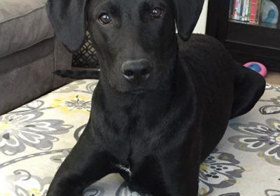 #,ixedbreed #bestdogtrainer #homedogtraining